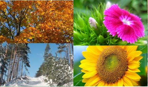 Développement personnel : Coaching des quatre saisons, faisant apparaître les 4 saisons, : automne, printemps, été, hiver