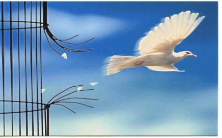 l'envol d'un oiseau