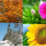 4 saisons : Automne, Hiver, Printemps et été.