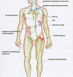 vidéo en ligne - cours de Yoga sur le système lymphatique