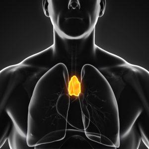 vidéo à la demande - système imunitaire et glande thymus